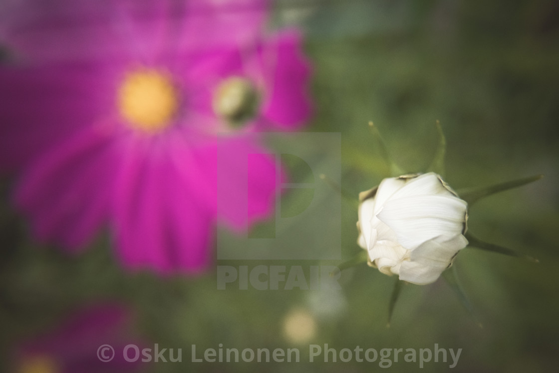 """White Flower III"" stock image"