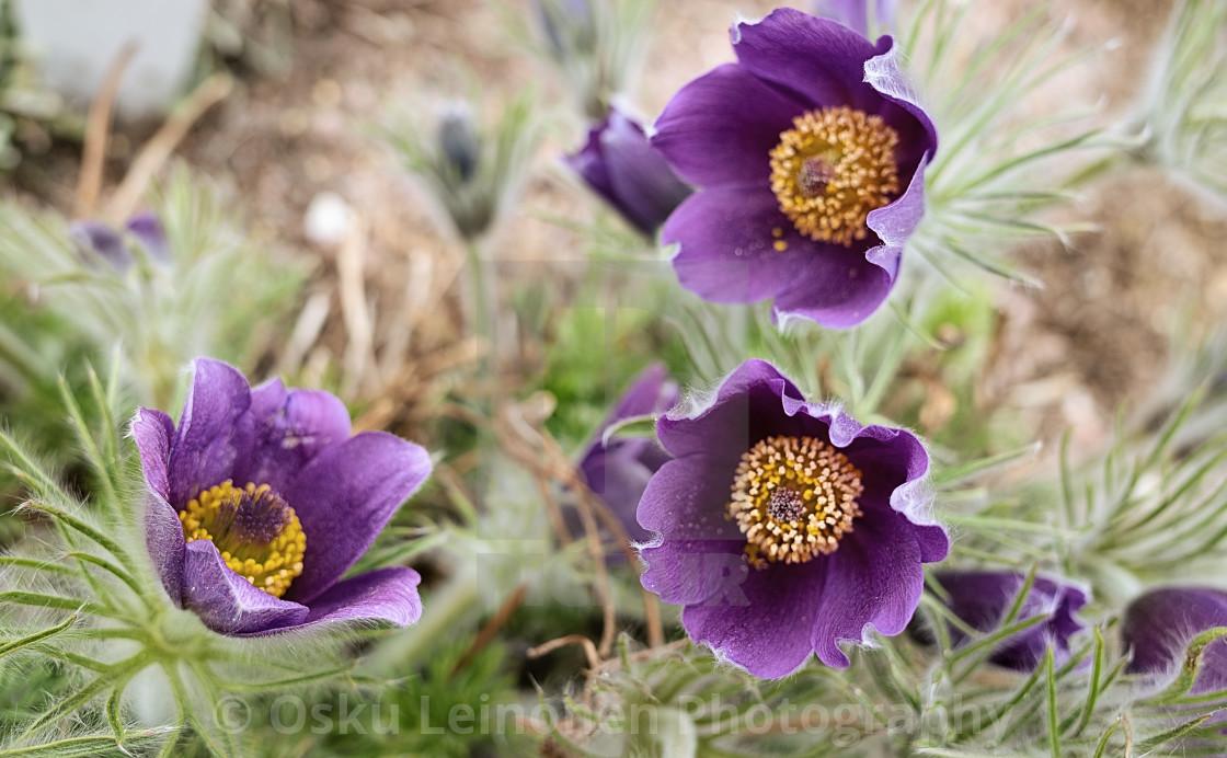 """Flower Of Frost III"" stock image"
