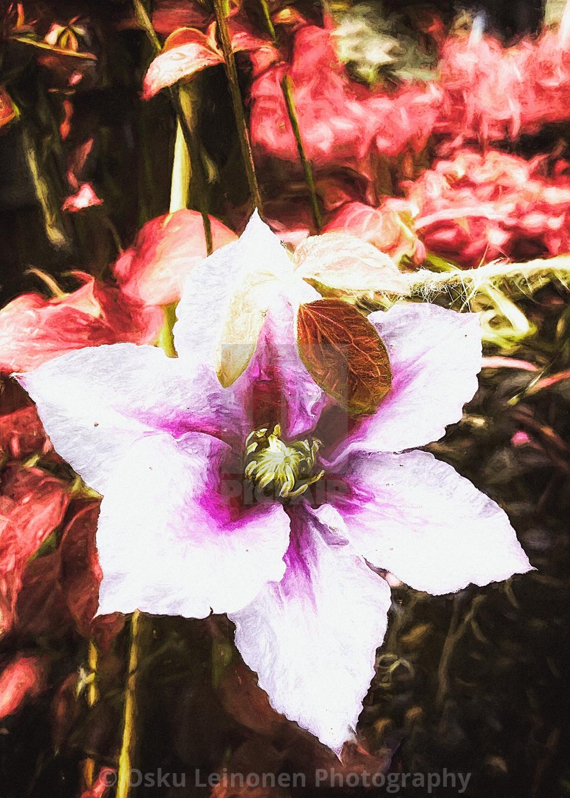 """""""Radiant Foliage II"""" stock image"""
