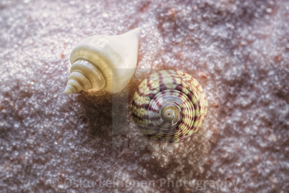 """Sea Shells"" stock image"