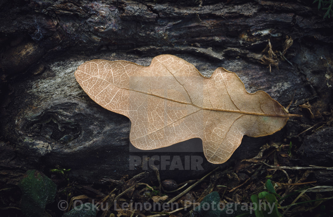 """Pathways II (Dry Leaf)"" stock image"