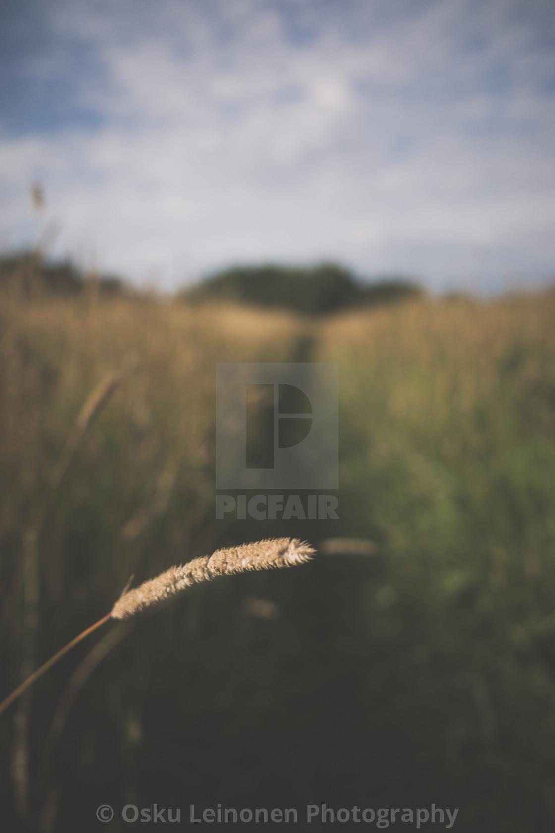 """Meadow XIX (Path)"" stock image"
