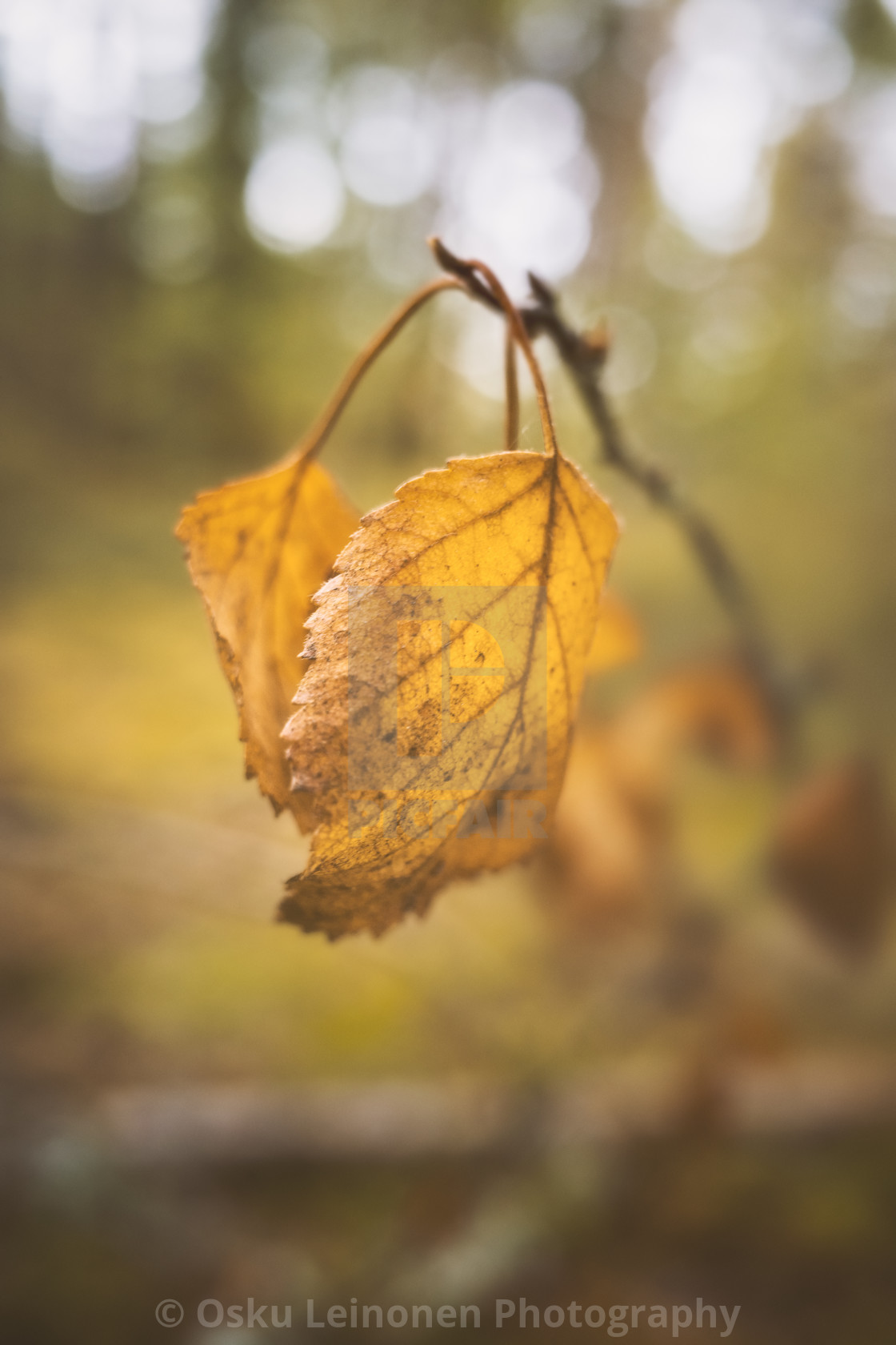 """Embrace I (Leaf Soft Colours)"" stock image"