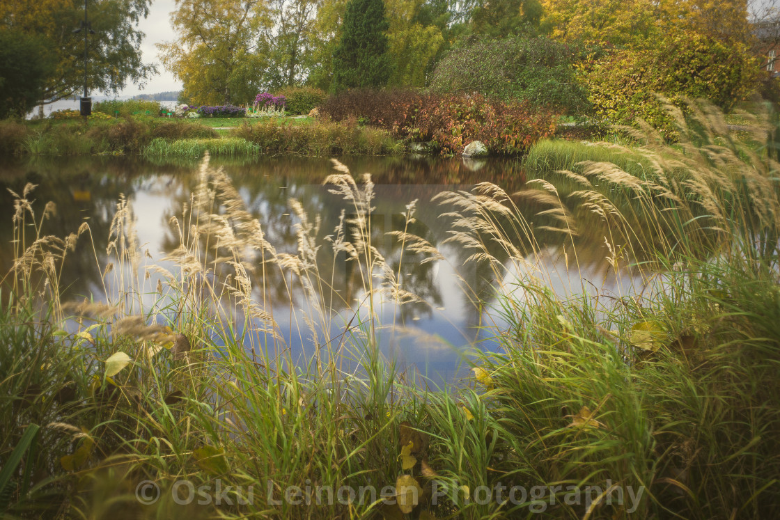 """Abundance V (Pond And Grass)"" stock image"