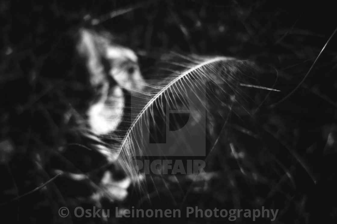 """Feather"" stock image"