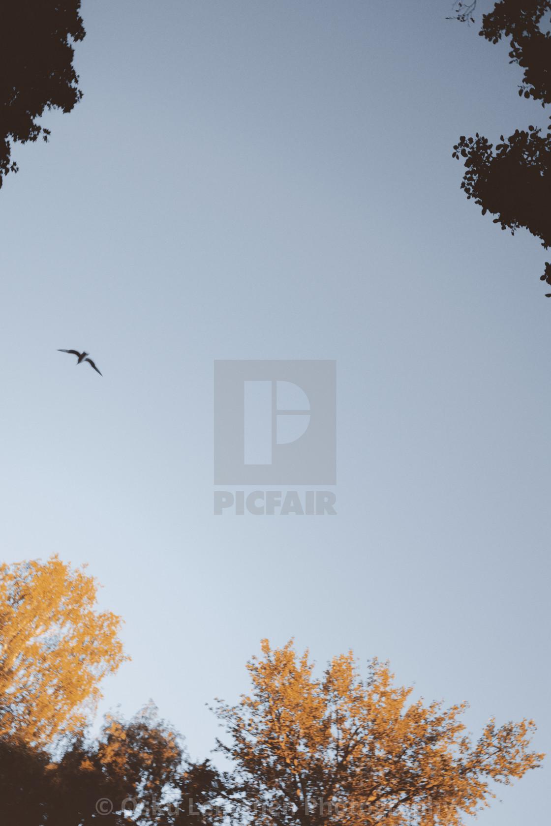 """""""Flying On The Sky II"""" stock image"""