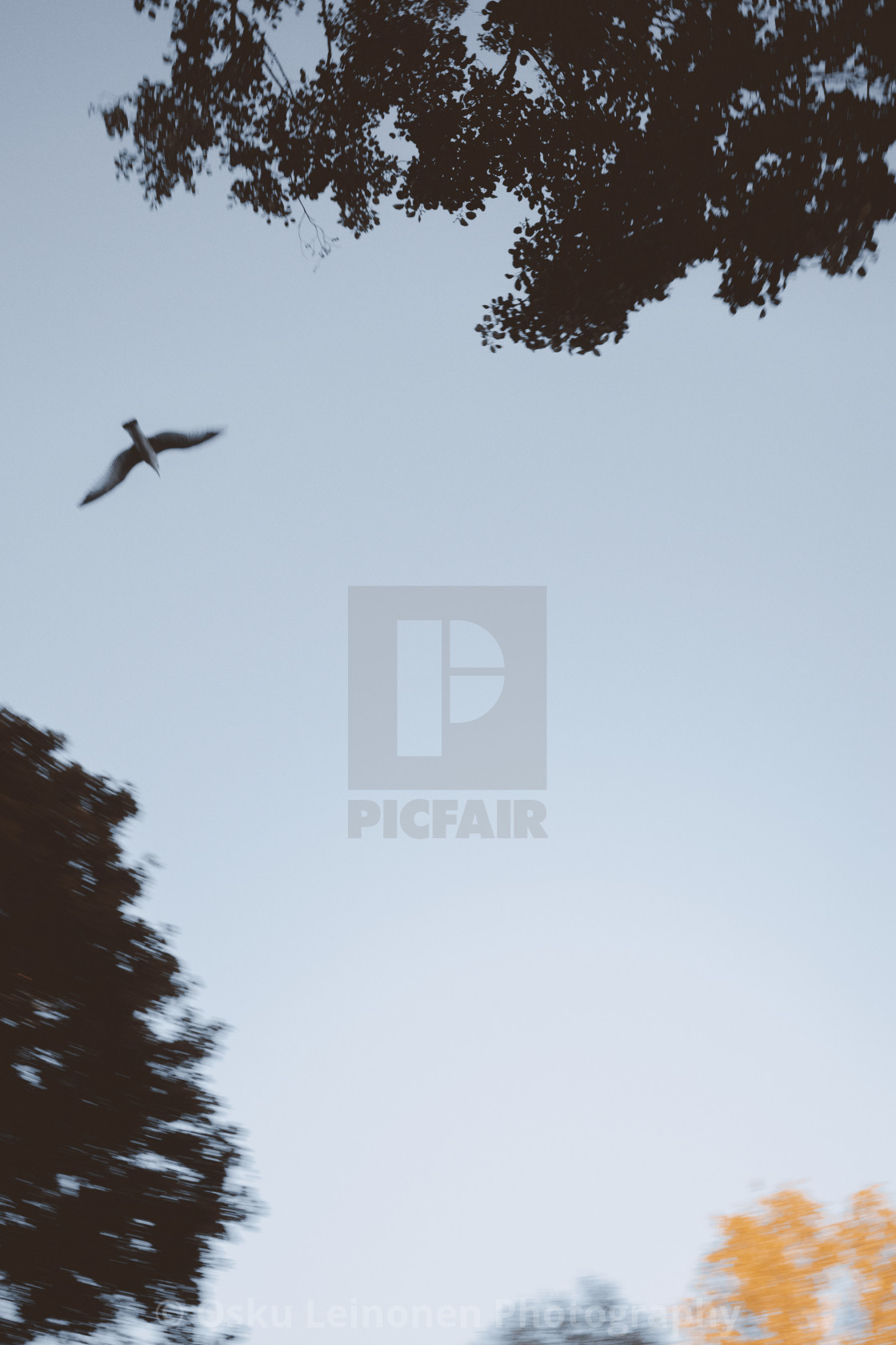 """Flying On The Sky I"" stock image"