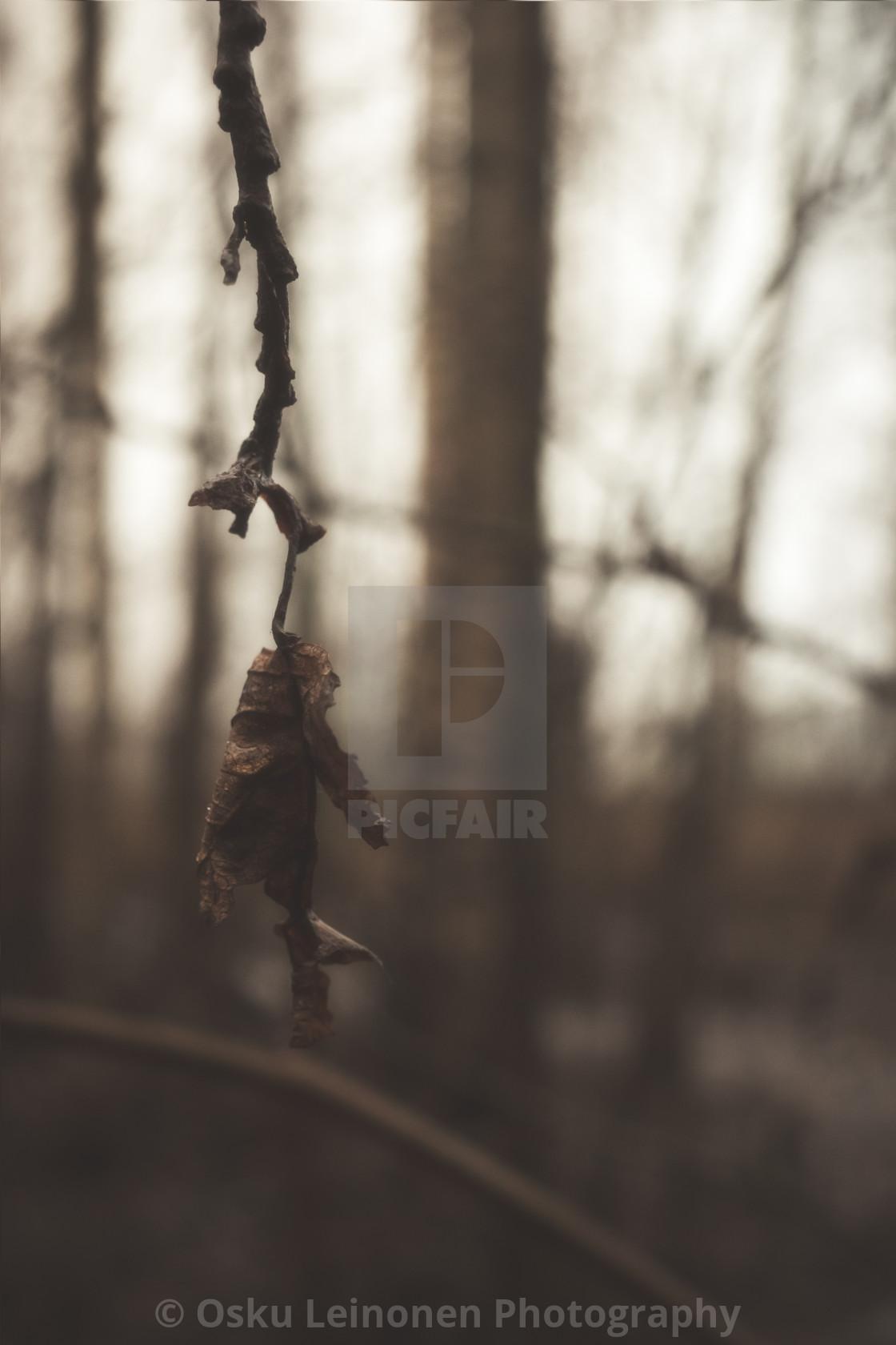 """""""Bog VII (Dry Leaf)"""" stock image"""