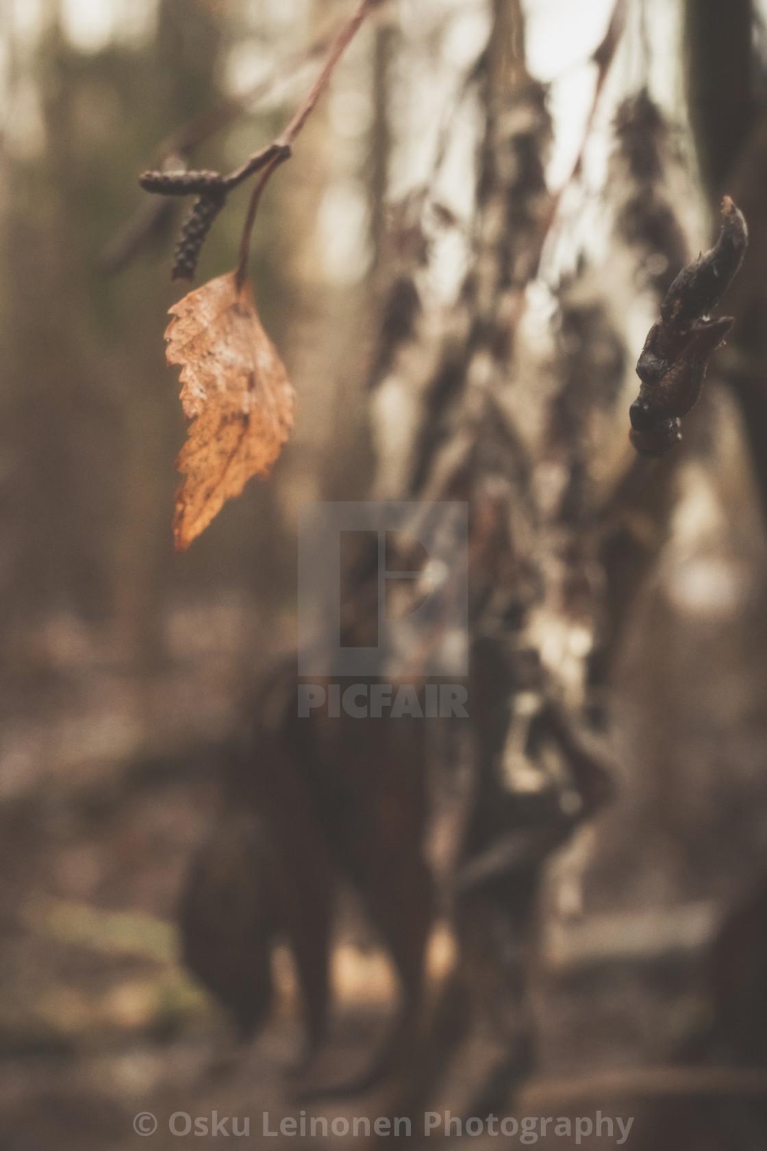 """""""Bog VI (Dry Leaf)"""" stock image"""