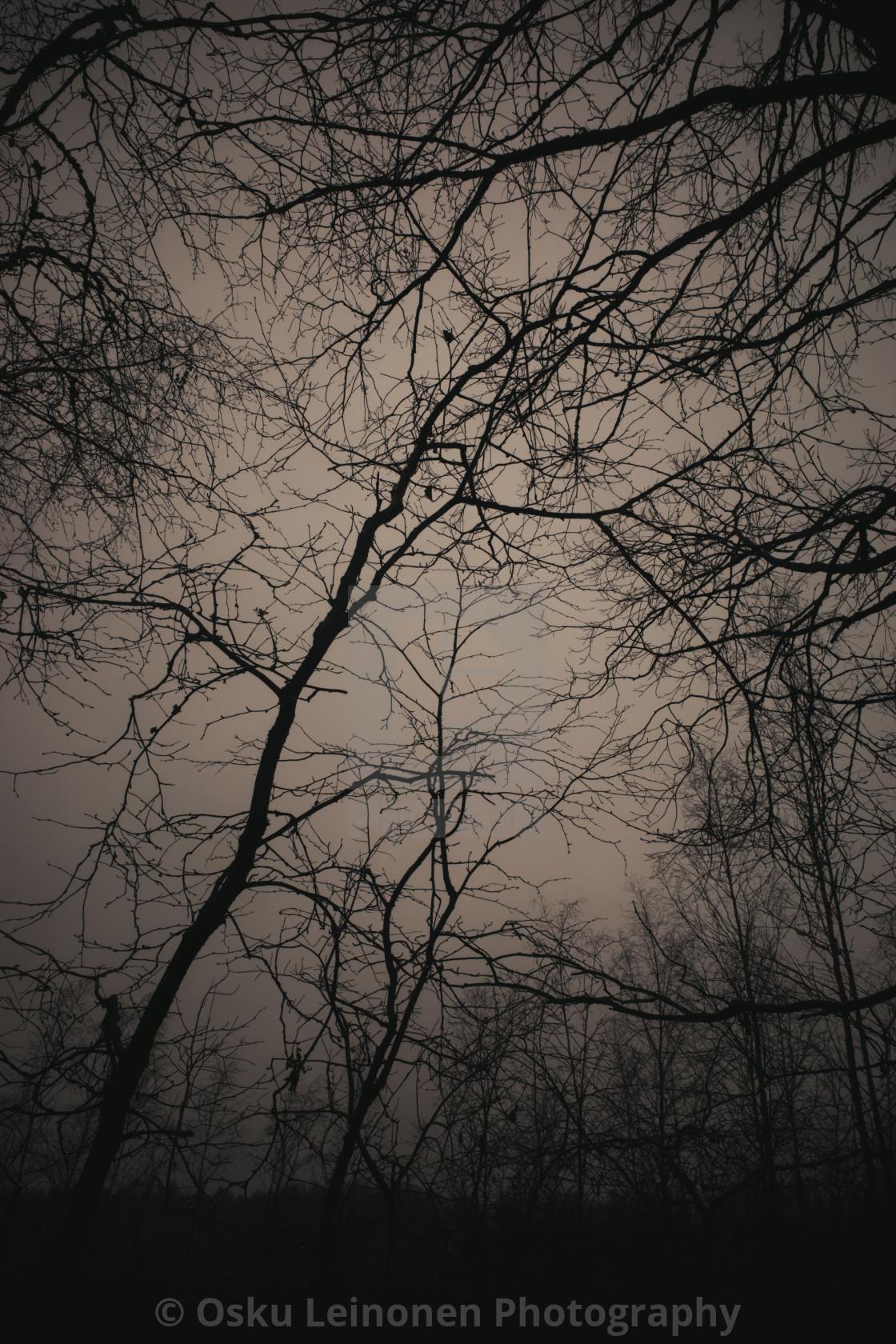 """Bog XVII (Trees)"" stock image"