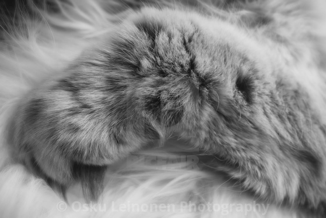 """Thoughtful Softness II (Paw)"" stock image"