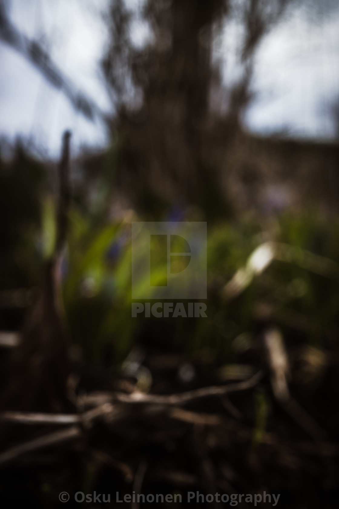 """Spring Garden VII (Blurred Grass)"" stock image"