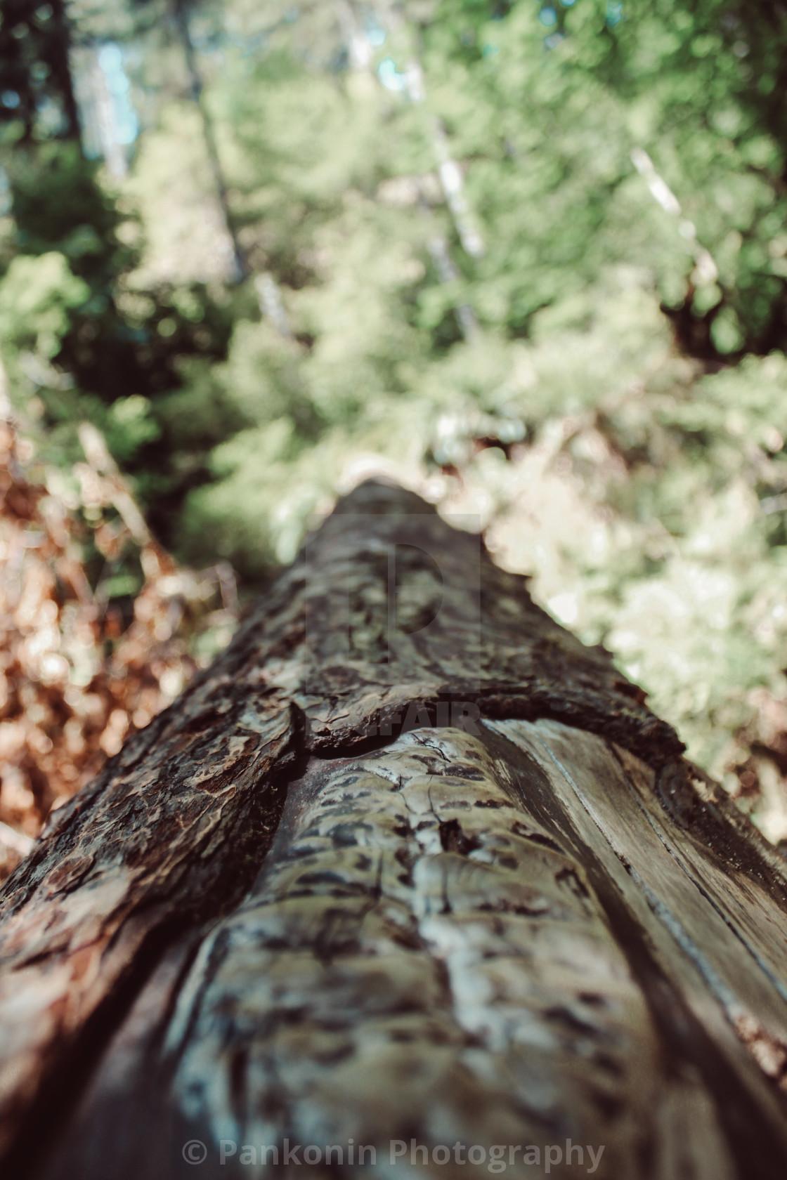 """""""Fallen Tree In Oregon"""" stock image"""