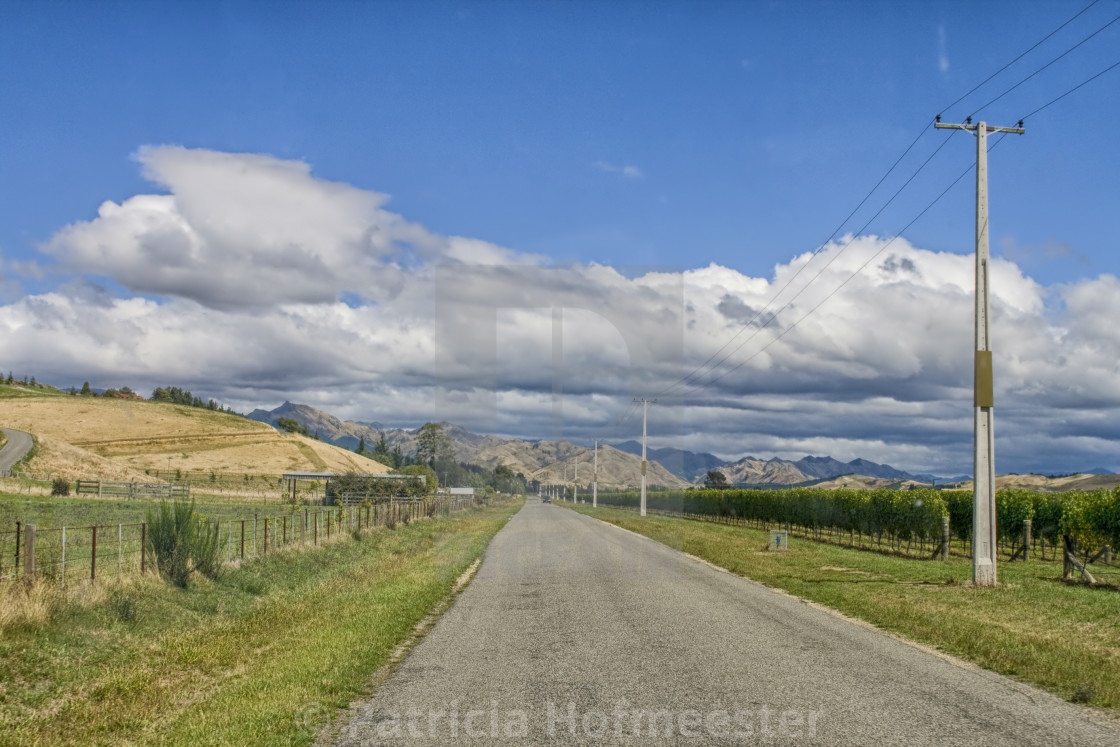 """Empty rural road through vineyards"" stock image"