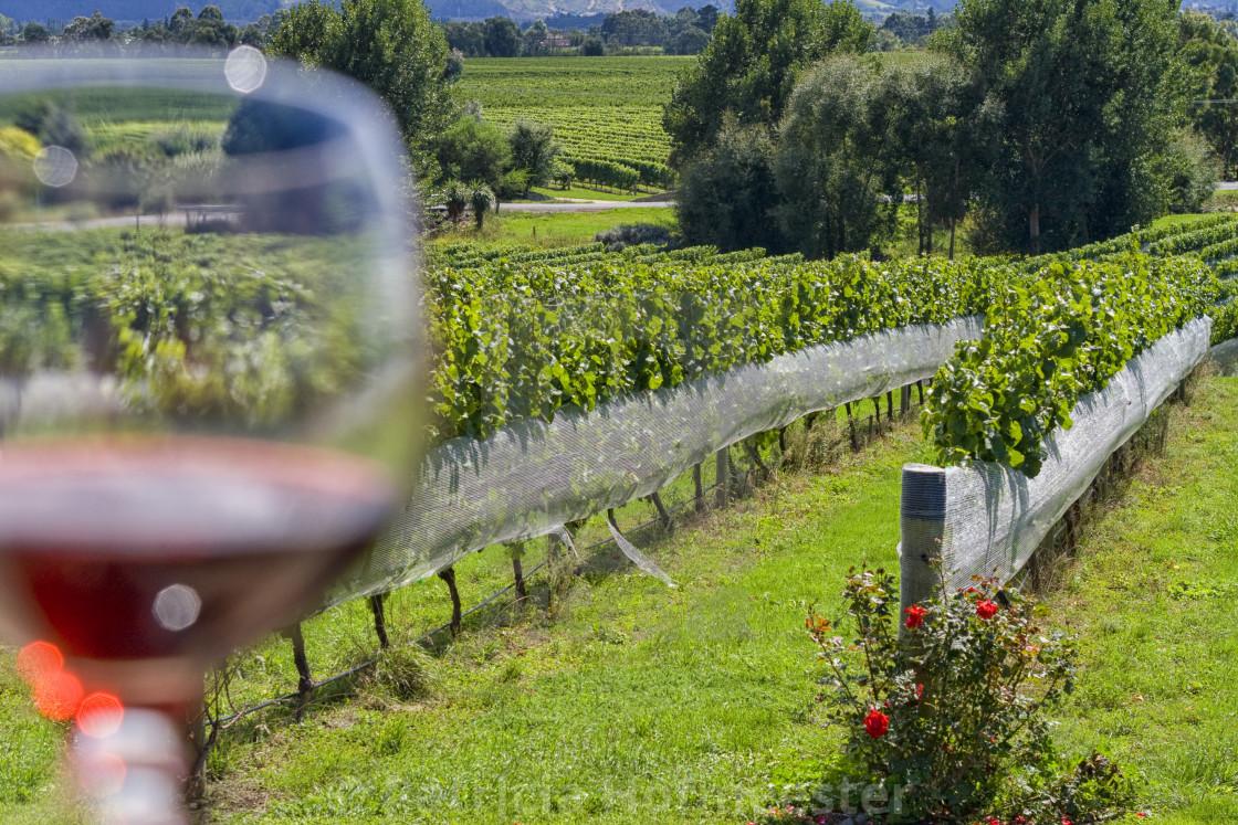 """Wineglass in vineyard"" stock image"