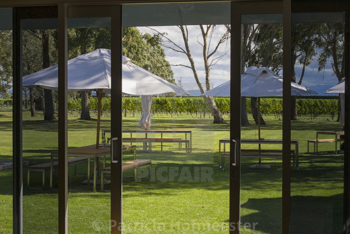 """""""View on vineyard with terrace"""" stock image"""