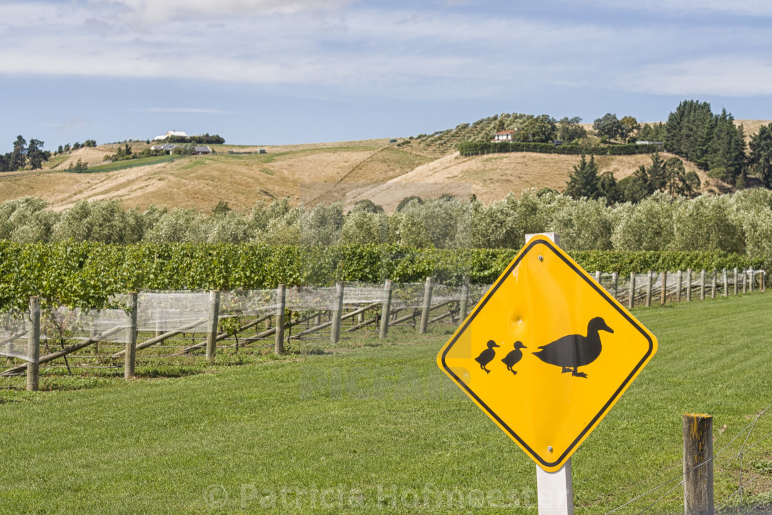 """Ducks crossing sign"" stock image"