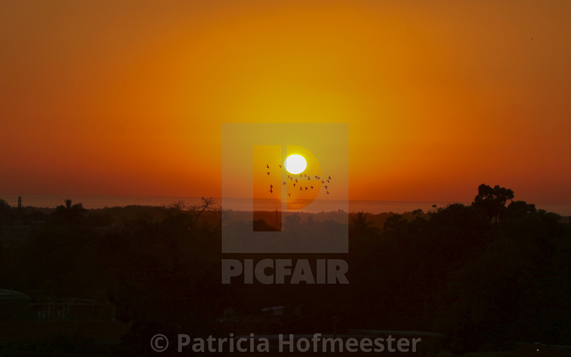 """""""Birds flying with a setting sun"""" stock image"""