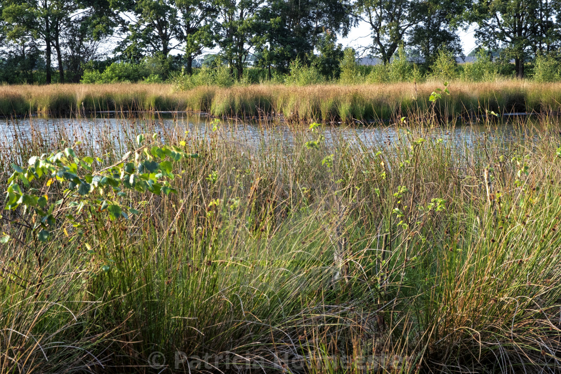 """""""Beautiful landscape with pond"""" stock image"""