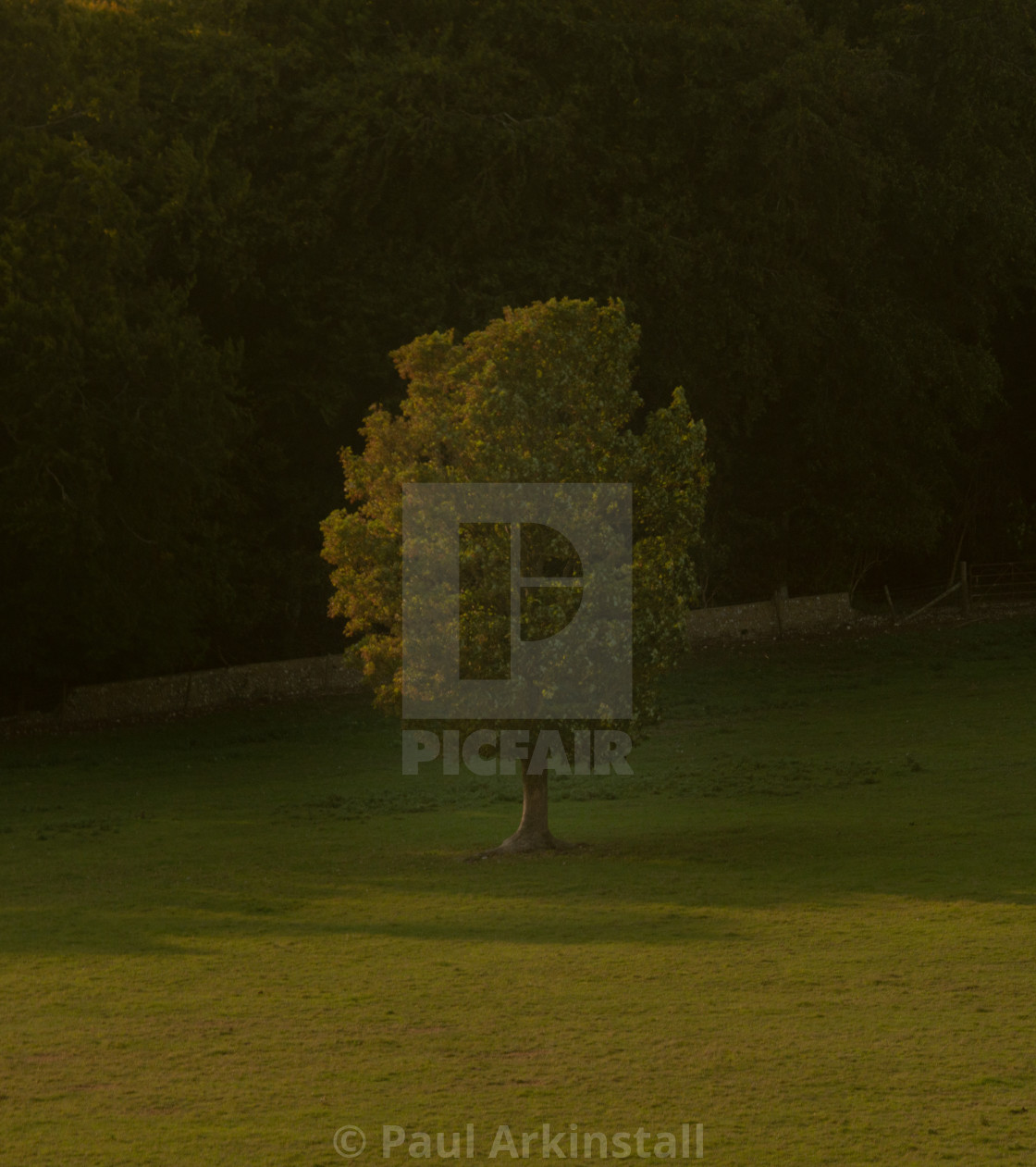 """""""Lonely tree at sunset 3"""" stock image"""