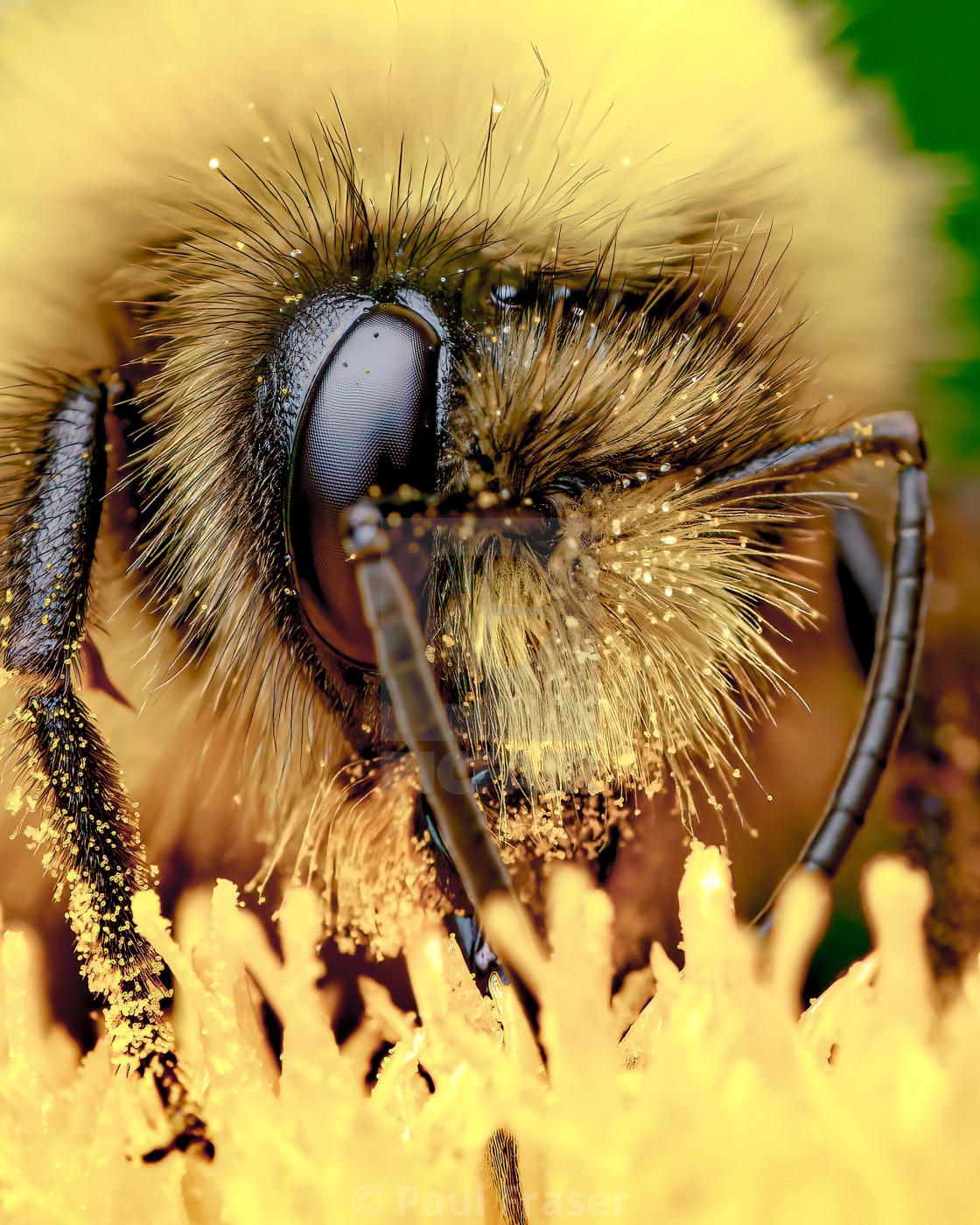"""""""Pollen Bomb"""" stock image"""