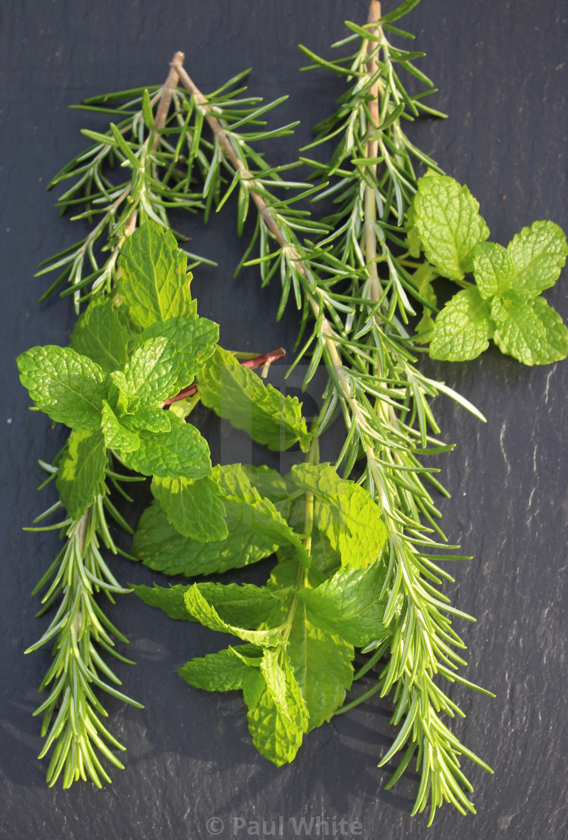"""Mint & Rosemary 2"" stock image"