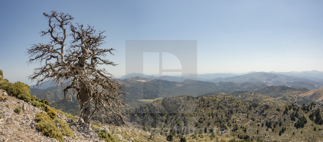 """Sierra de las Nieves, Spanish reserve in southern Spain."" stock image"