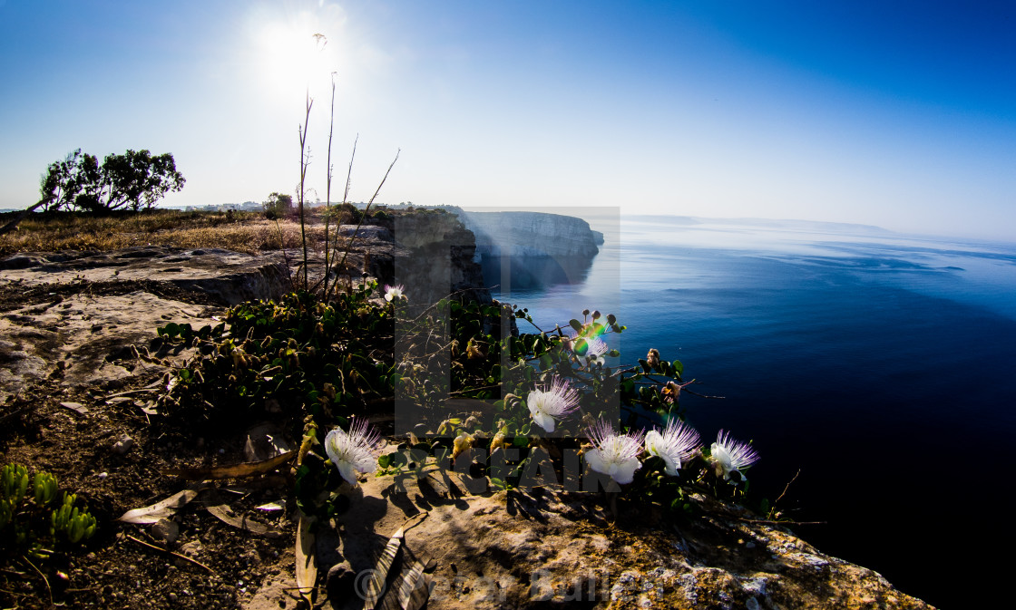 """""""Capers on the cliffs"""" stock image"""