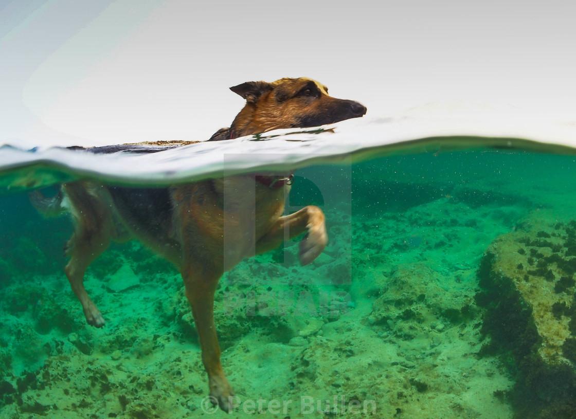 """Jaba the swimmer"" stock image"