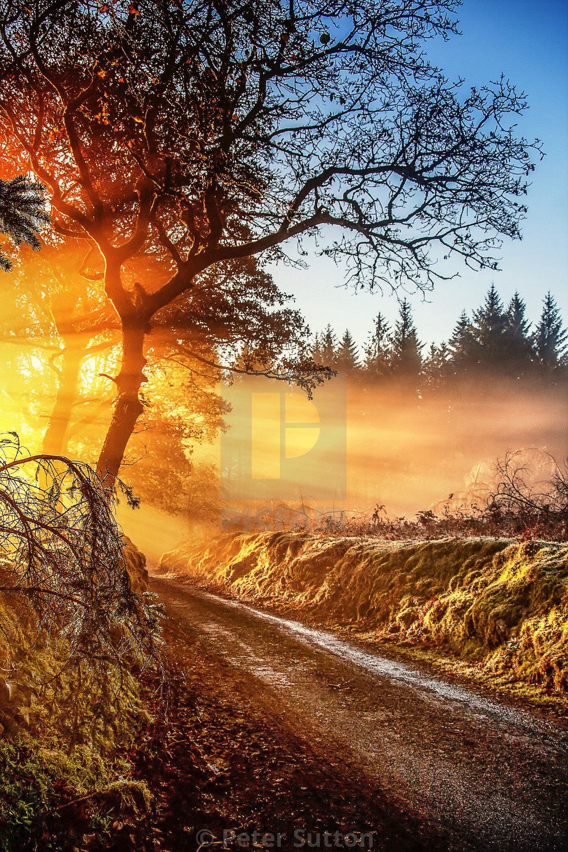 """""""A Frosty Morning On Dartmoor"""" stock image"""