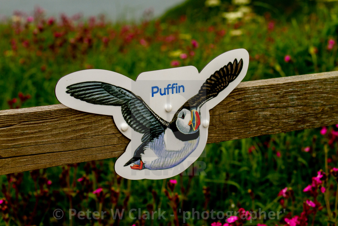 """Puffin Sign at Bempton Cliff Reserve, Yorkshire."" stock image"