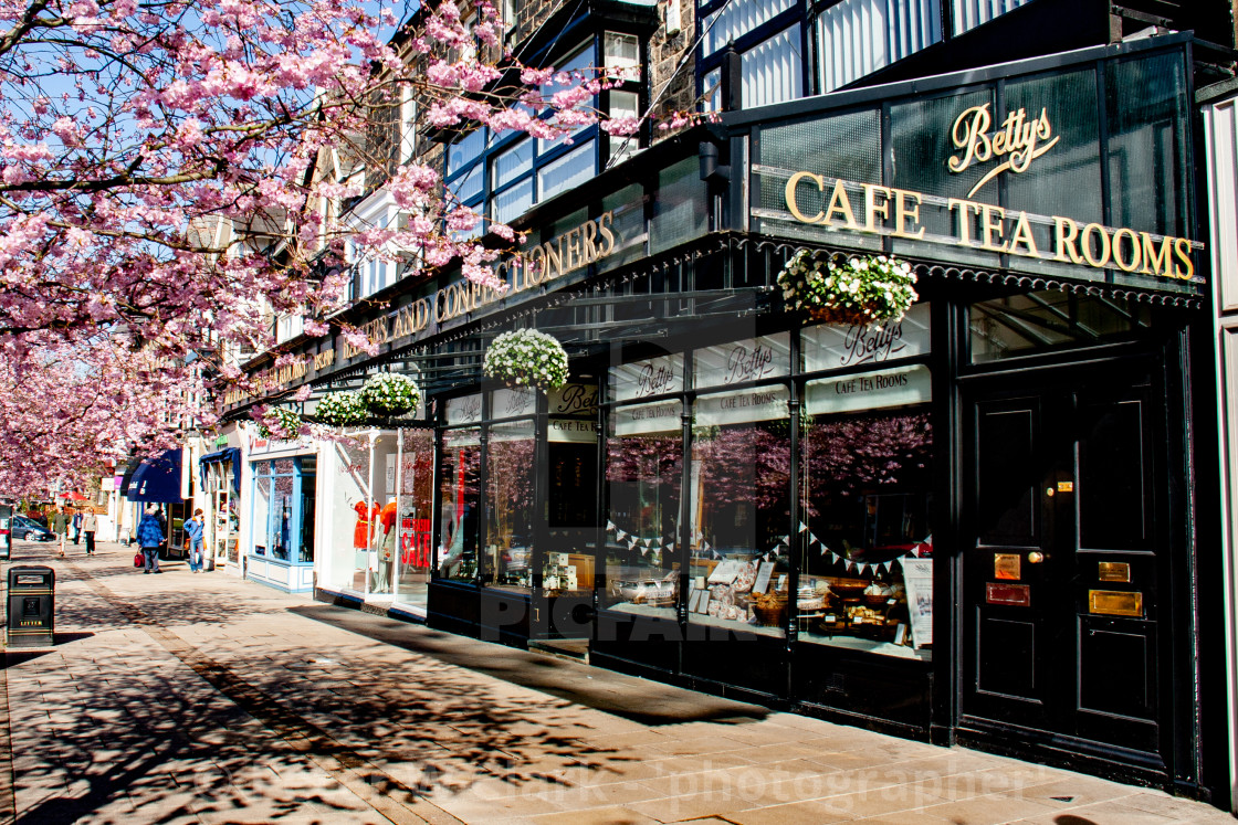 """Bettys Tea Room, Ilkley, Surrounded by Cherry Blossom."" stock image"