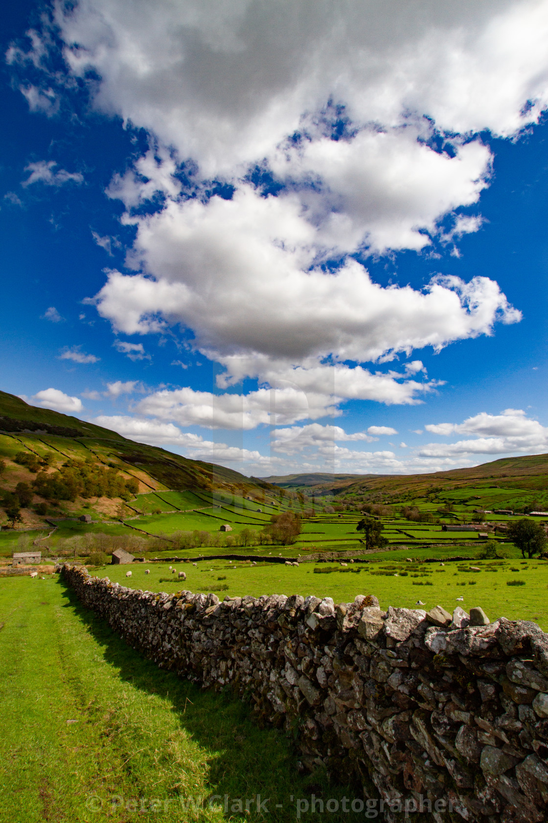"""""""Swaledale Meadow with dry stone wall boundary"""" stock image"""