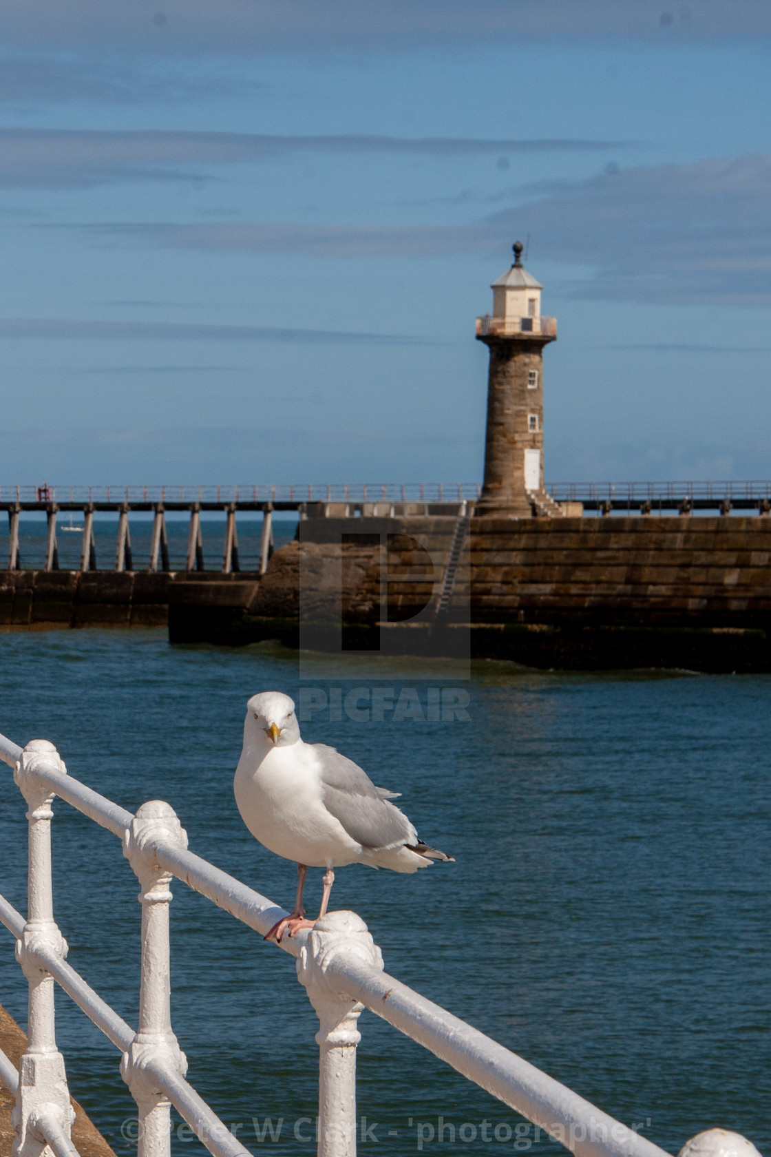 """Whitby, UK, East Yorkshire Coast. Herring Gull Sat on Harbour Railing. East Pier Lighthouse in the Background"" stock image"