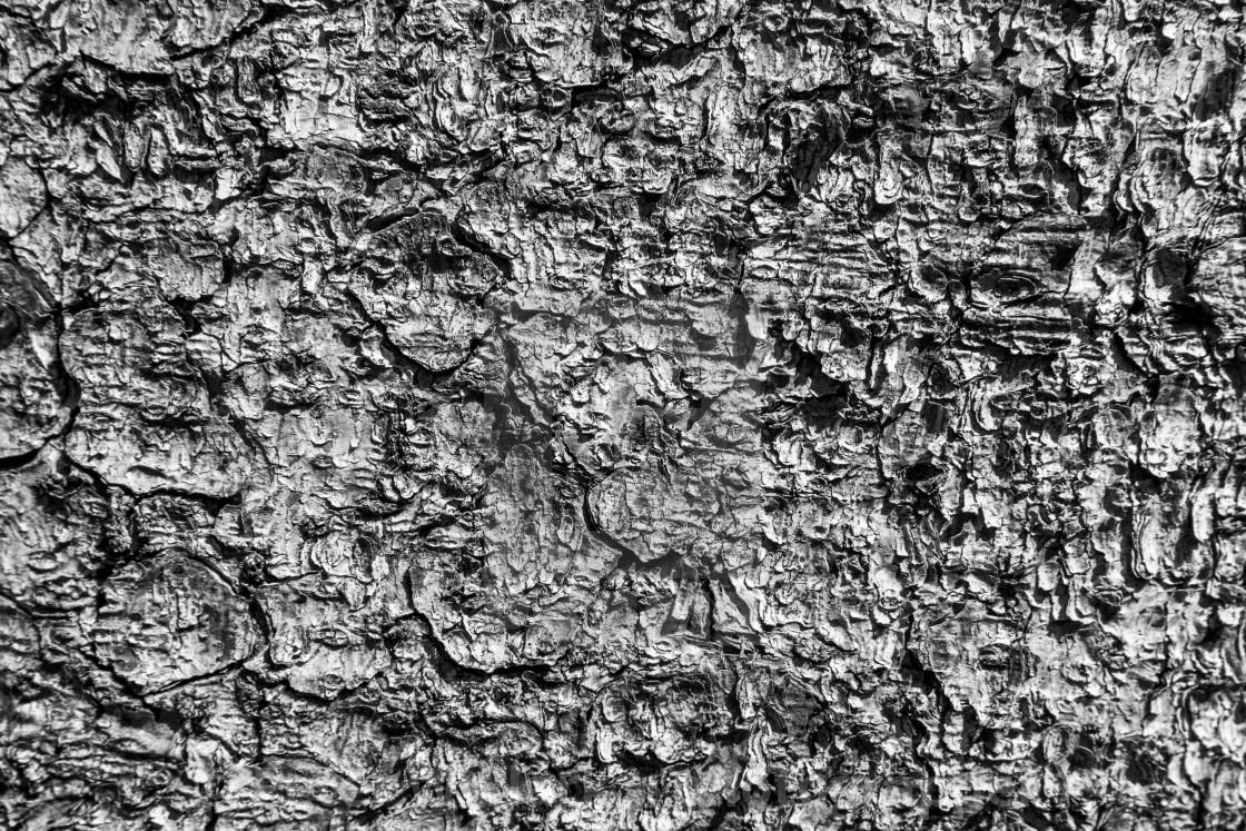 """Tree Bark Detail. Monochrome."" stock image"