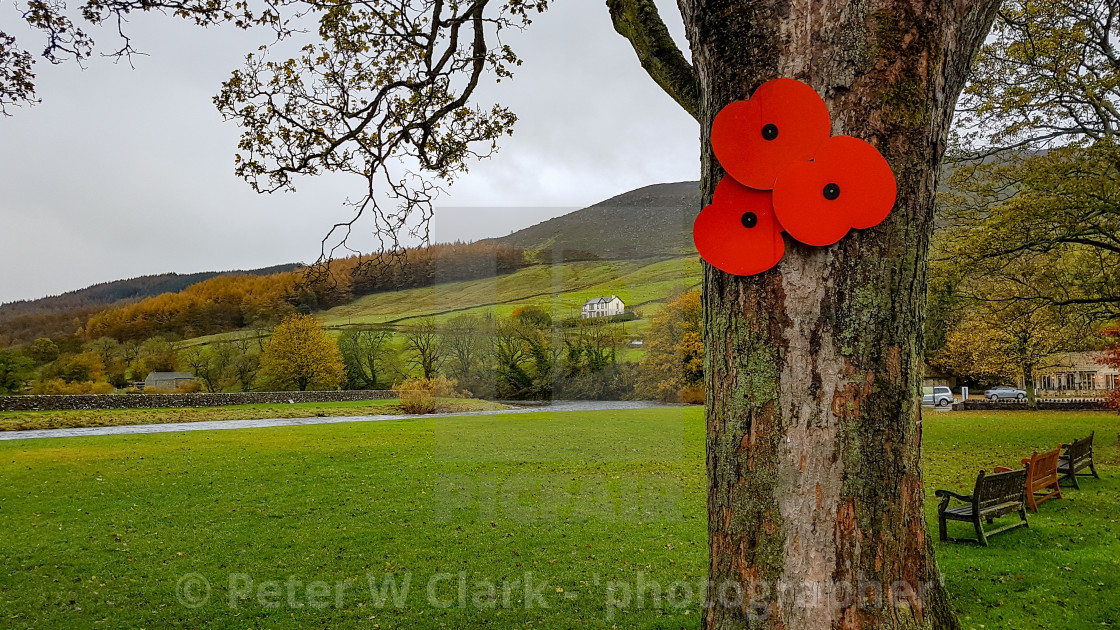 """""""Burnsall, a Yorkshire Dales Village, England. Poppy displayed on tree for Remembrance Day."""" stock image"""