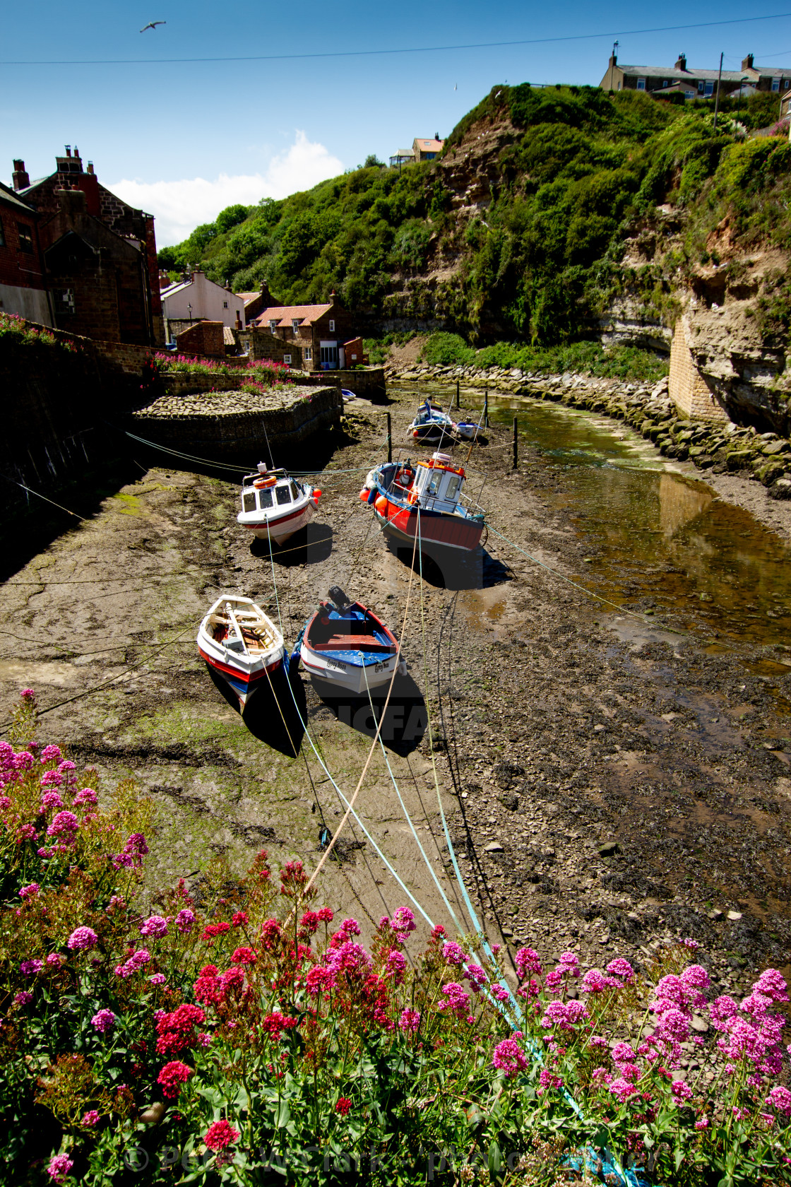 """""""Fishing Cobbles Moored in Staithes Beck, Staithes, Yorkshire, UK."""" stock image"""