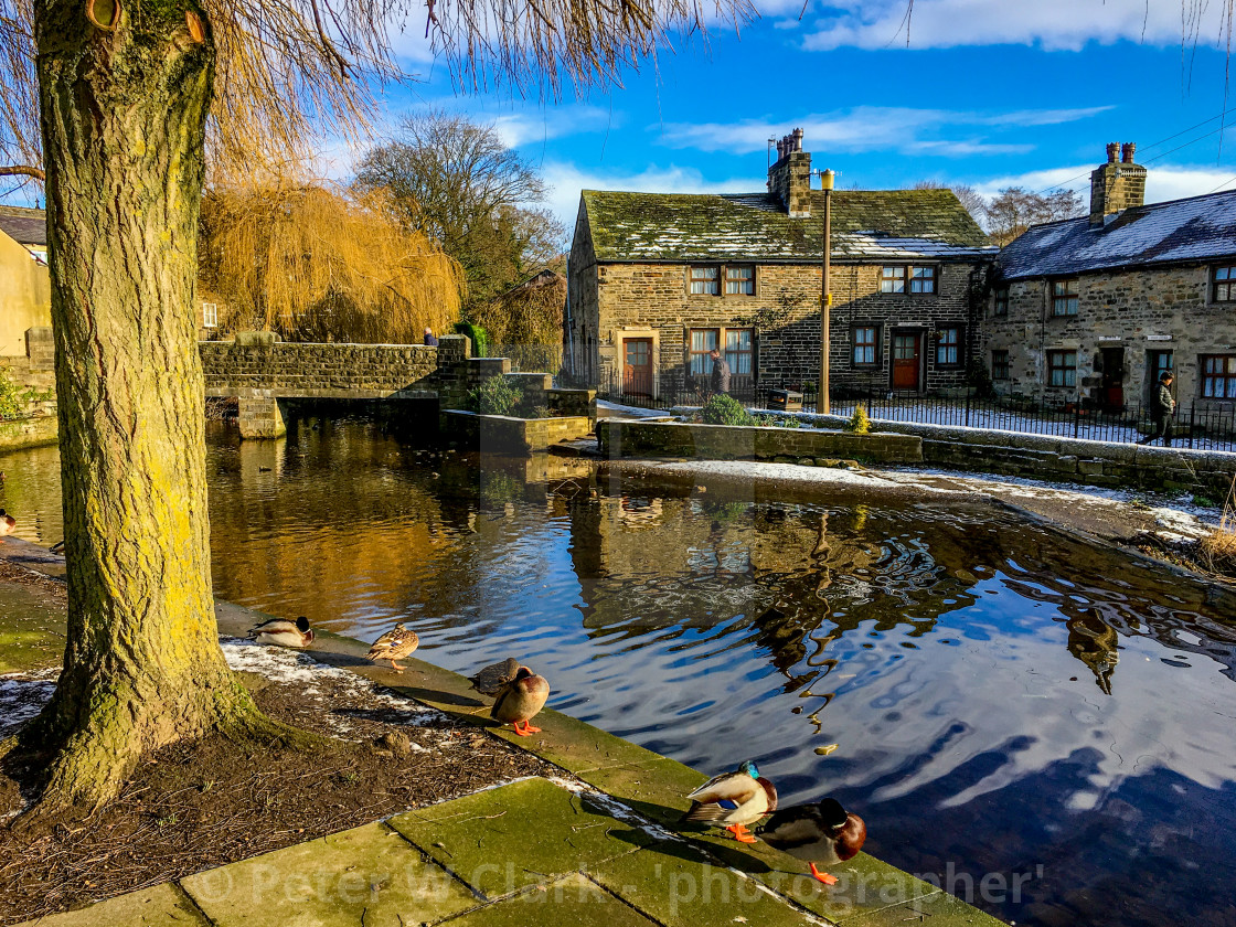 """The Beck, Silsden (Cobbydale) Ducks contemplating a paddle."" stock image"