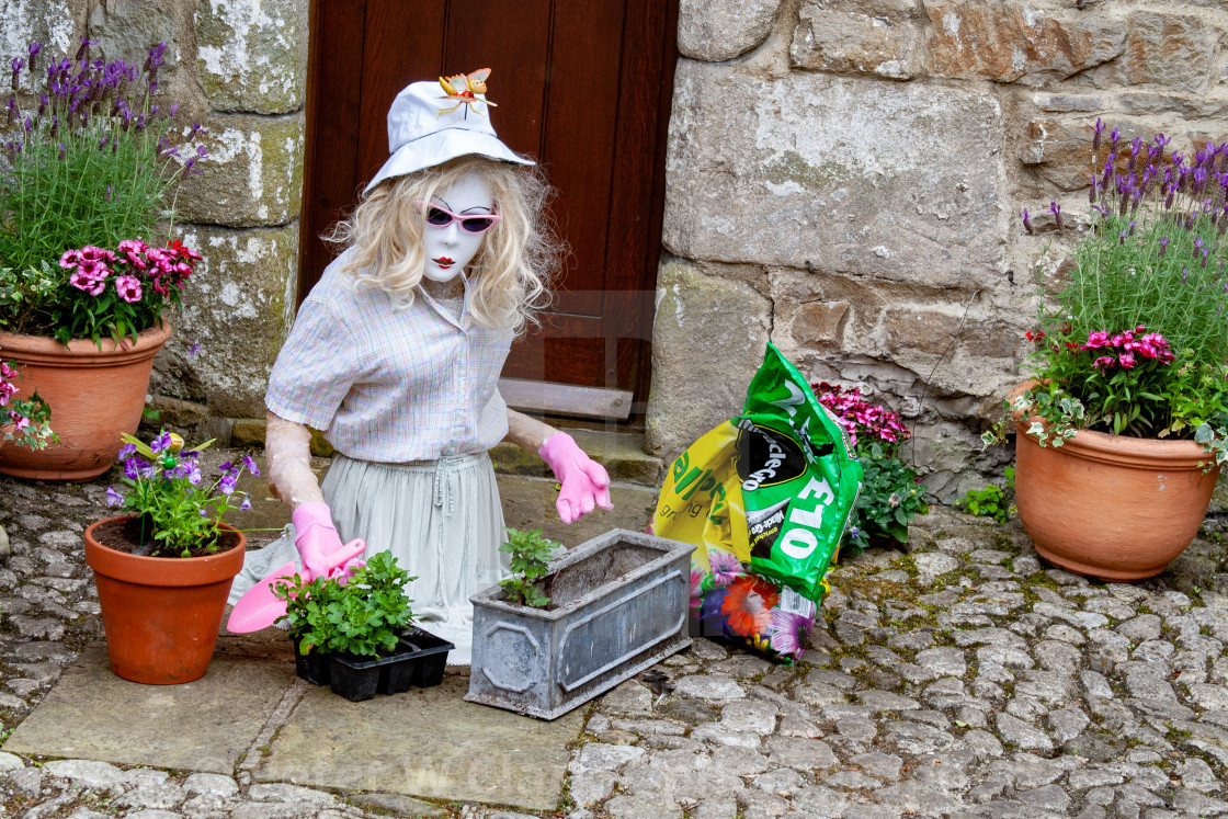 """Kettlewell Scarecrow Festival and Trail. Lady Potting Plants. Yorkshire Dales, England."" stock image"