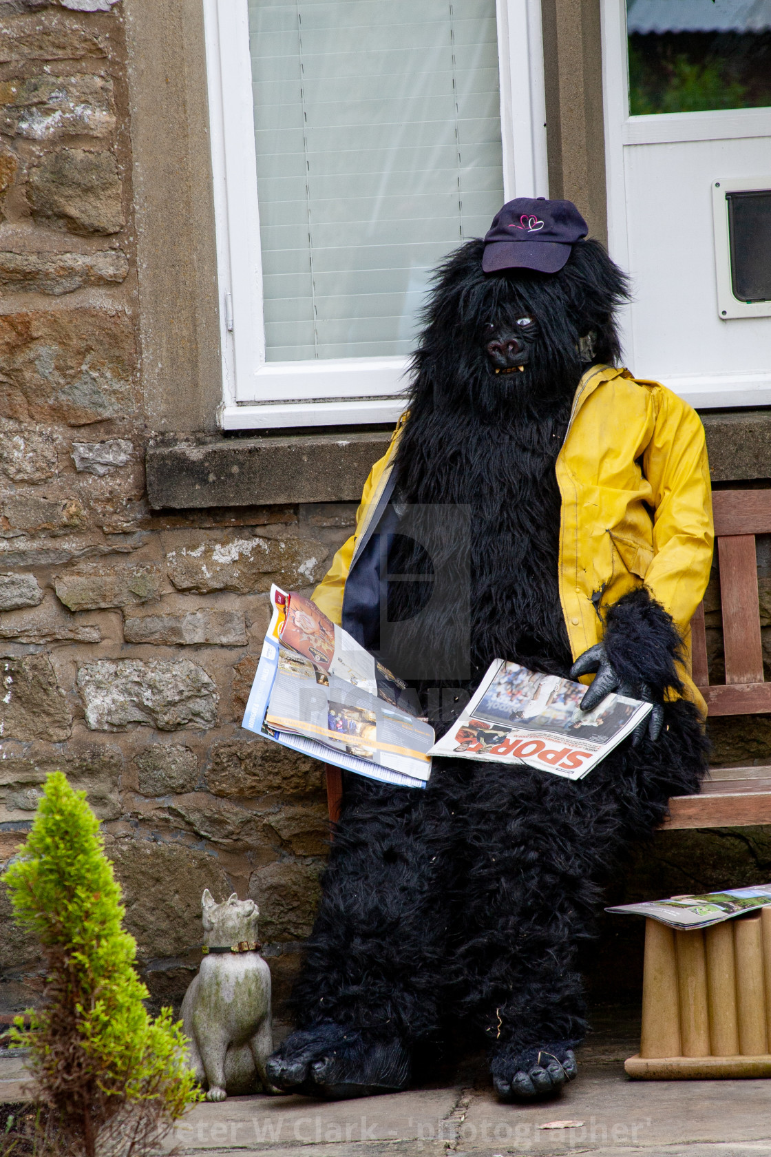 """Kettlewell Scarecrow Festival and Trail, Gorilla in Yellow Jacket. Yorkshire Dales, England."" stock image"