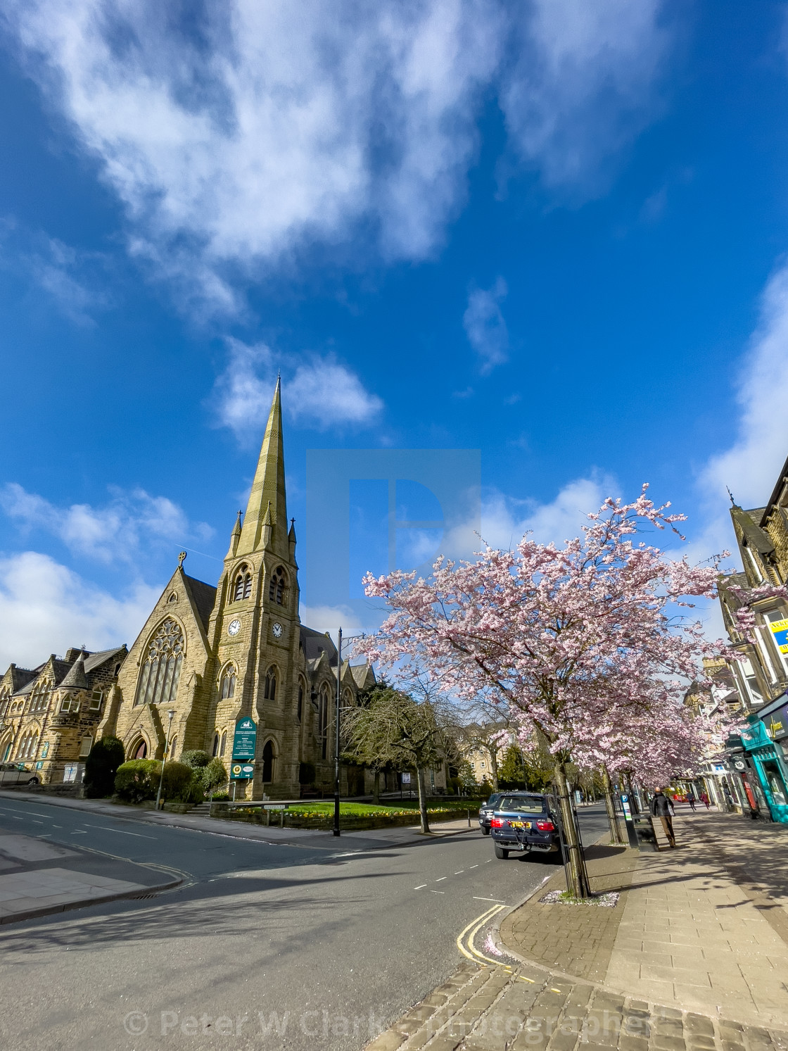 """Christchurch and Cherry Blossom in Sunshine, The Grove, Ilkley."" stock image"