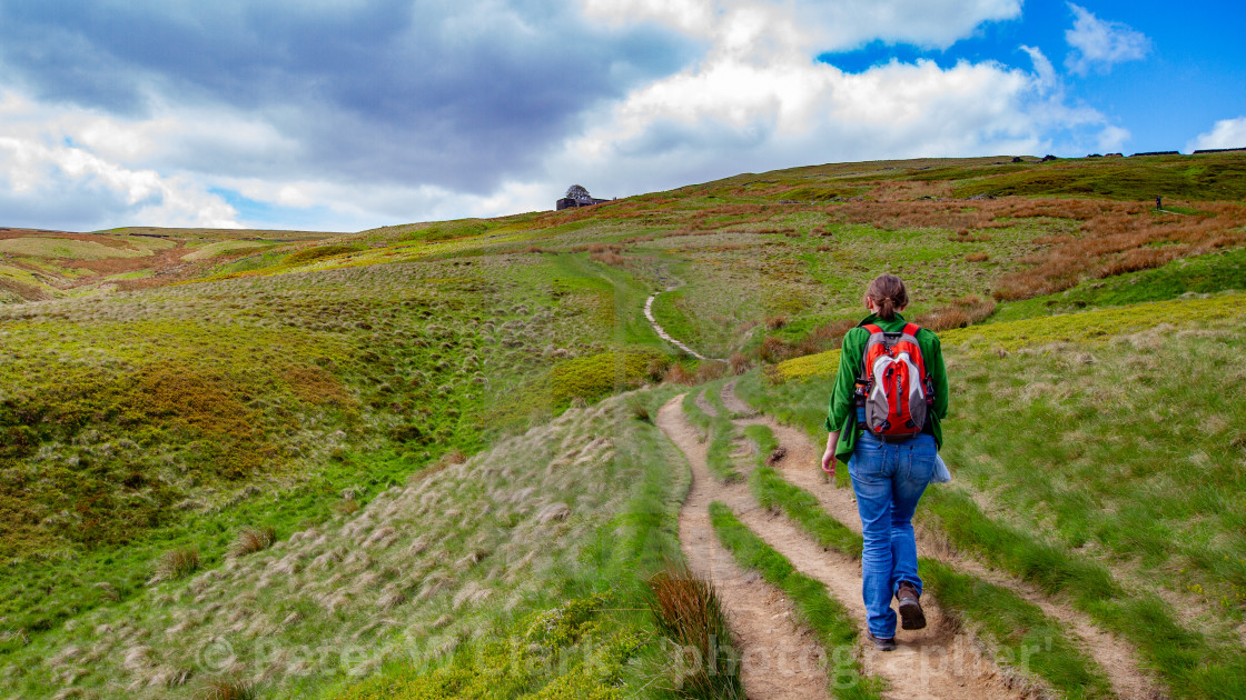 """""""Bronte Country, Walker on Footpath The Bronte Way to Top Withens, a Derelict Farmhouse,"""" stock image"""