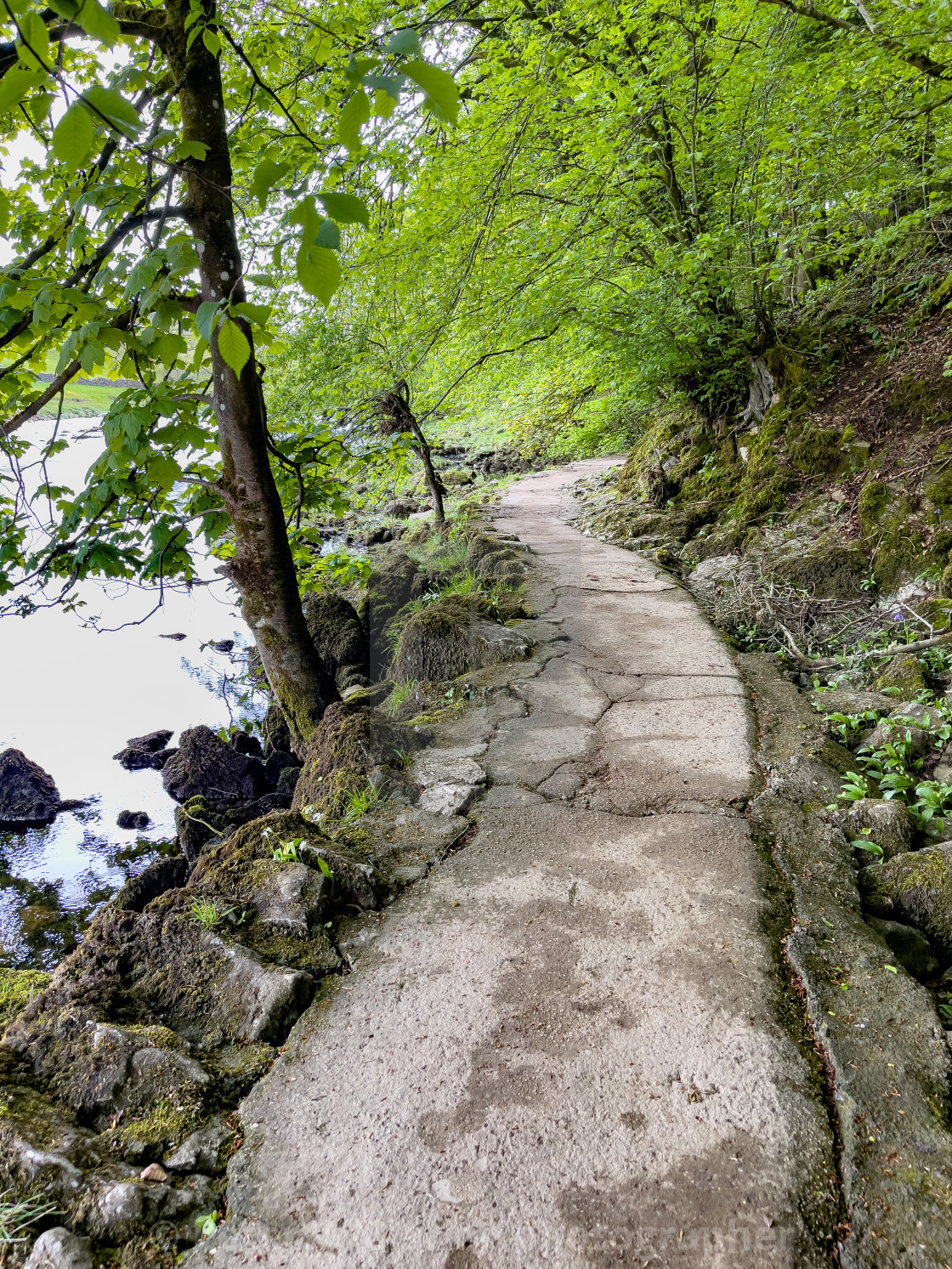 """""""Dalesway Footpath near River Wharfe, Burnsall in the Yorkshire Dales."""" stock image"""