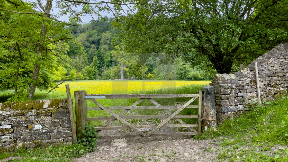 """""""Meadow next to River Swale, Richmond, North Yorkshire."""" stock image"""