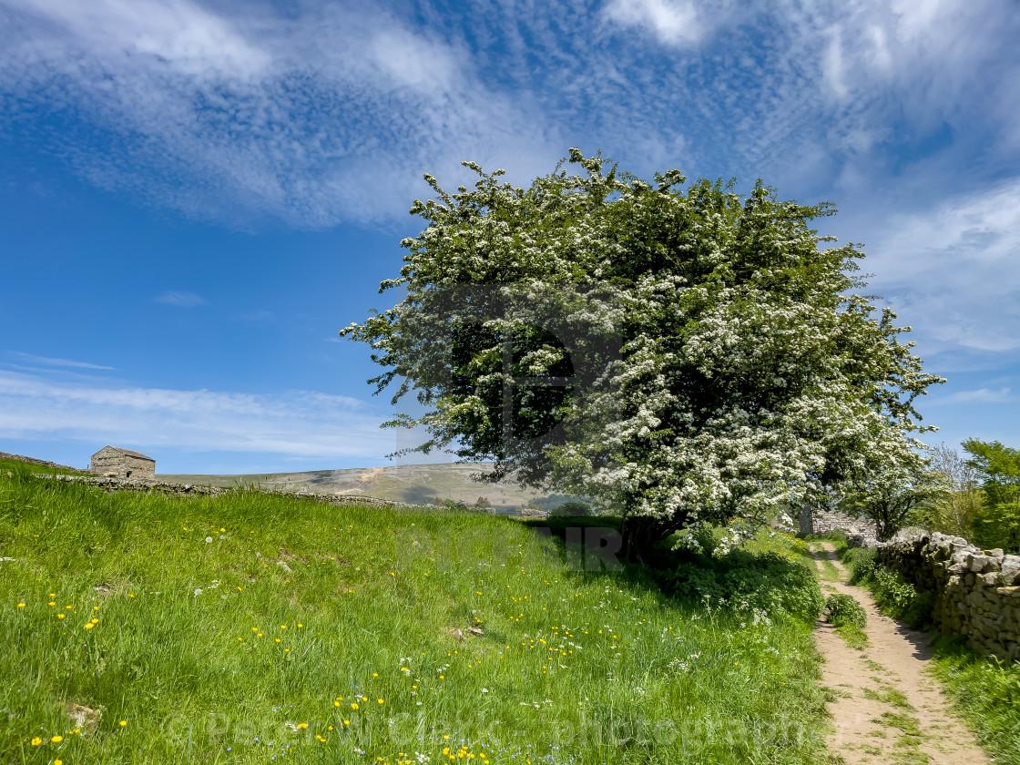 """Swaledale Wild Flower Meadow and Field Barn near Reeth."" stock image"