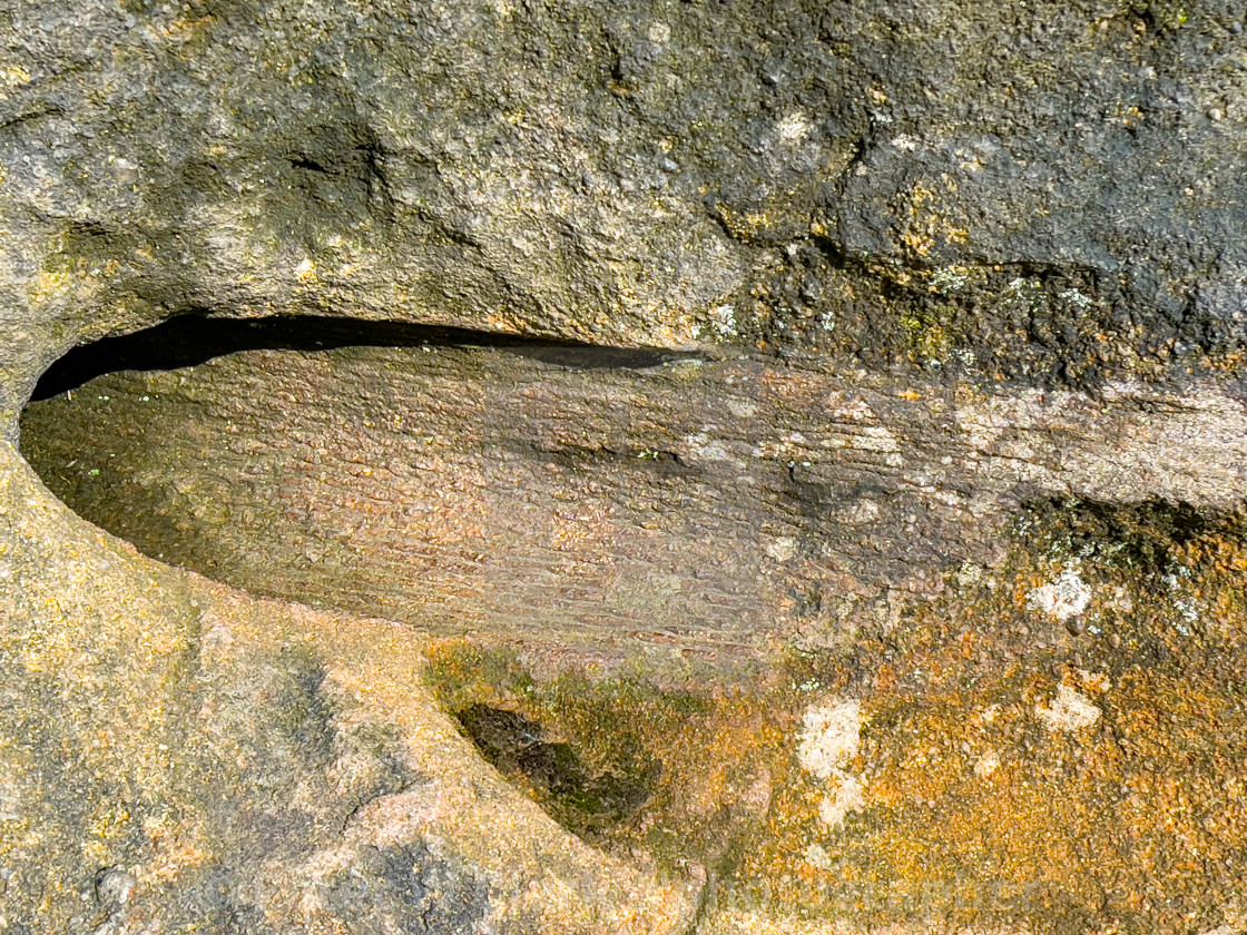 """""""Trace Fossil, Ilkley Moor"""" stock image"""