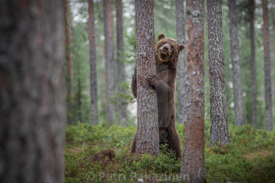 """Tree hugger"" stock image"