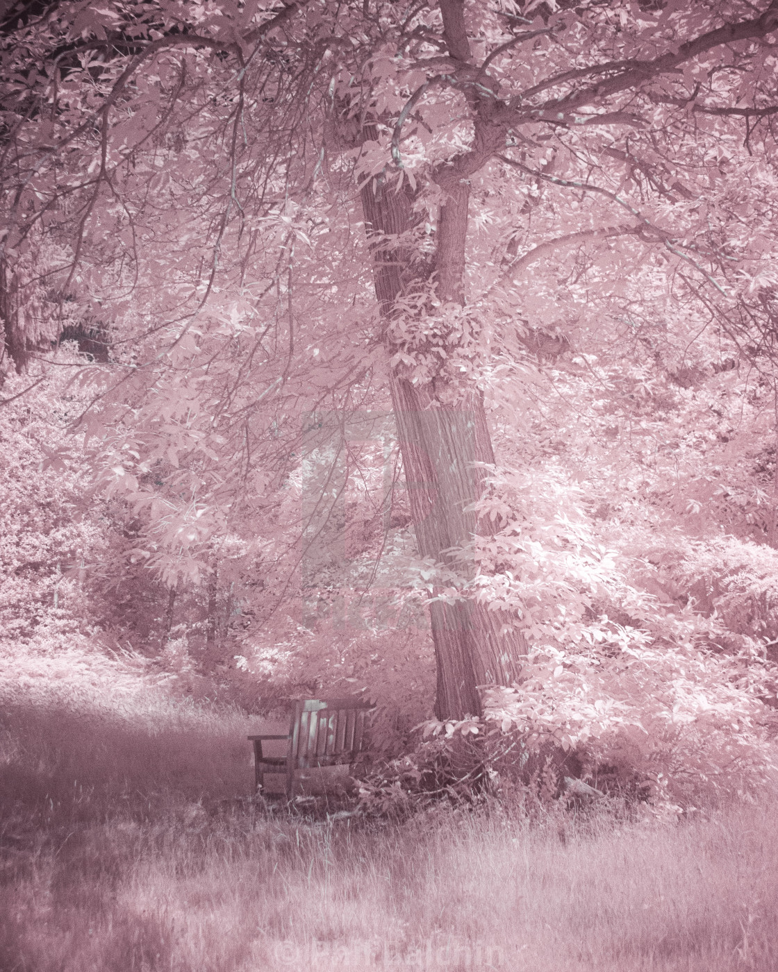 """Infrared Tree and bench"" stock image"