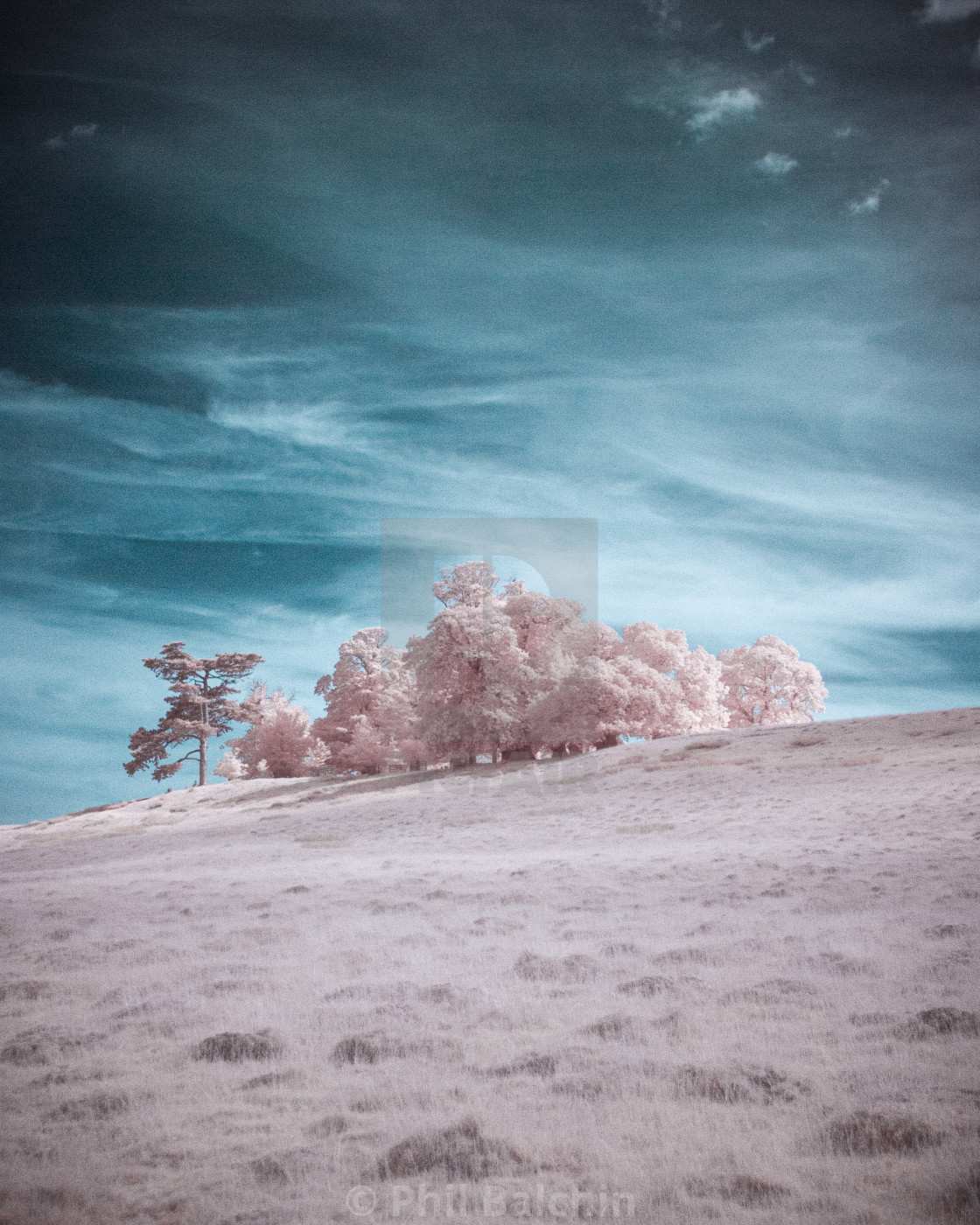 """""""Infrared Trees on a Hill"""" stock image"""