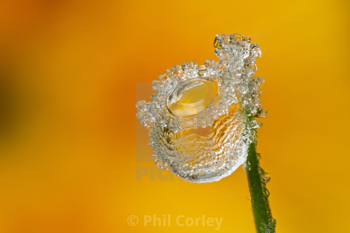 """""""Frosted Waterdrop"""" stock image"""